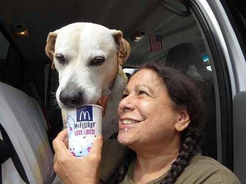 Этих собак из приюта возят в кофейню, чтобы напоить сливками и найти им новый дом