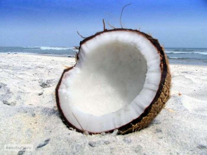 Что находится внутри кокоса?
