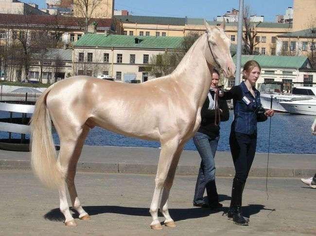 Потрясающие лошади