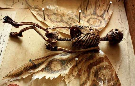 Самые жуткие существа, когда-либо найденные на Земле