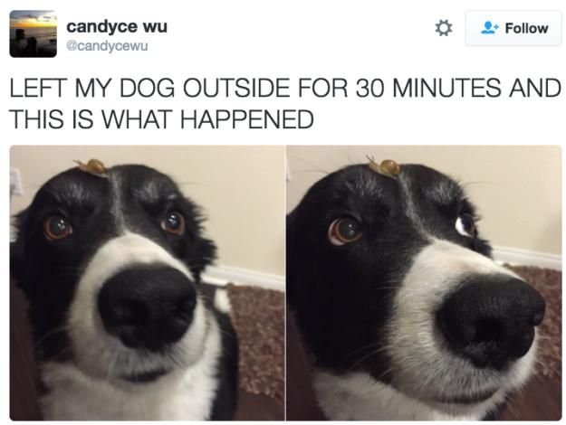 Несколько доказательств собачьего совершенства