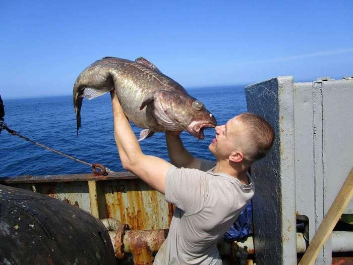 Морские твари или братья наши скользкие