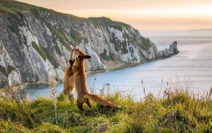 Лучшие фотографии животных прошлой недели
