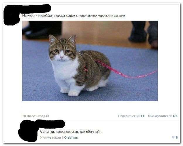 Свежая подборка забавных комментариев из разных социальных сетей.