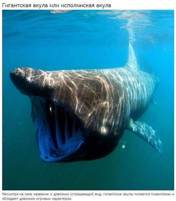 10 абсолютно безвредных животных, которых люди боятся до смерти