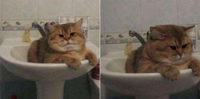 19 фотографий толстых котиков, которые сделают ваш день лучше