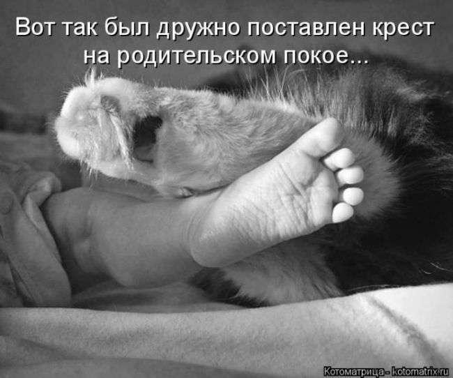 ДОМАШНИЕ ЛЮБИМЦЫ...