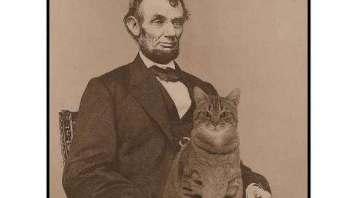 Кот до добра не доведет: самые безумные кошатники в истории