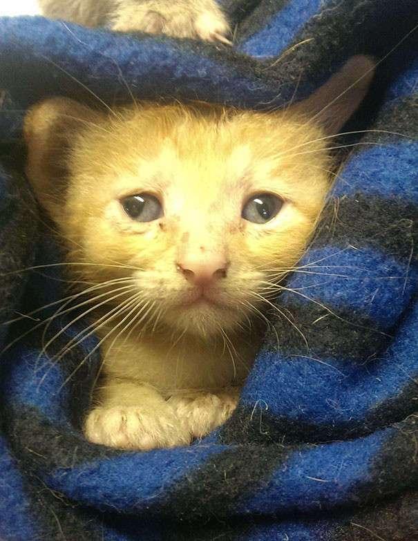 15 котов с изюминкой, которые доказывают, что любить нужно не за внешность