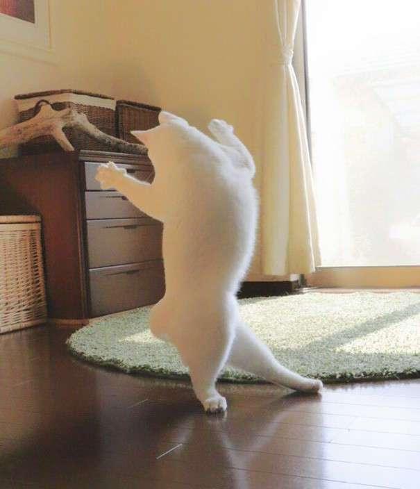 Эта кошка танцует так, будто никто ее не видит