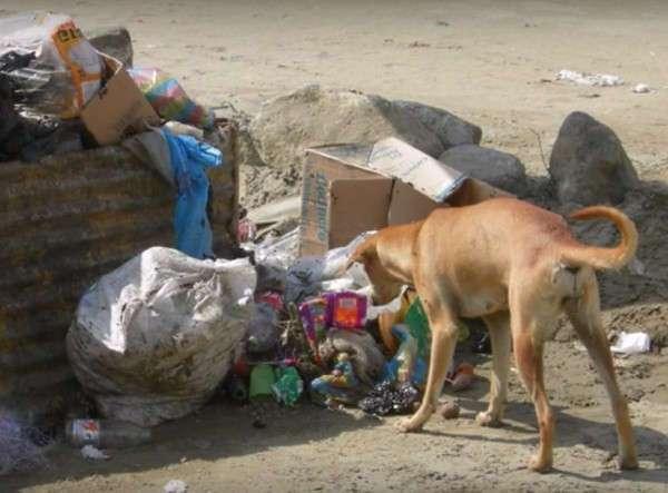 Собака отрыла на мусорке и вынесла к людям… младенца! О таком спасении в городе ещё не слышали