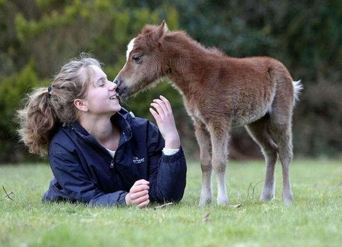 Дружелюбные мини-лошадки с большим сердцем