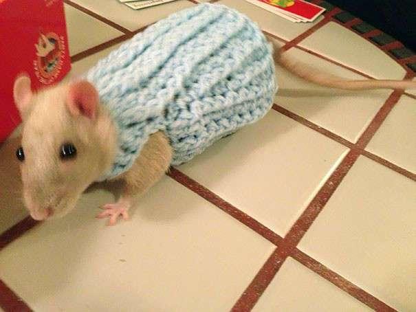 30 маленьких животных в миниатюрных свитерах, от вида которых вы расплыветесь в улыбке
