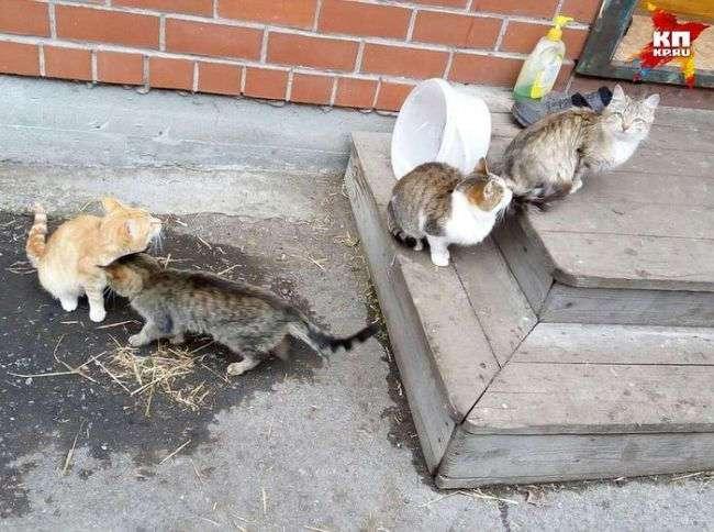 На Урале четыре кошки два месяца ждут у дома своих хозяев, погибших в ДТП