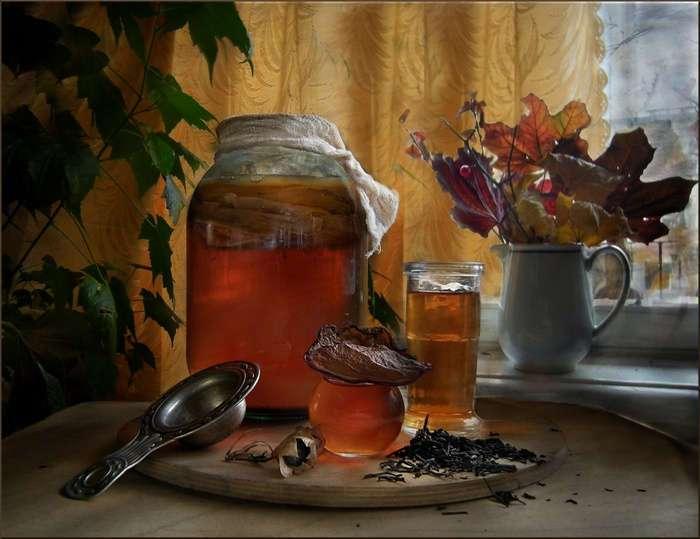 Что такое чайный гриб, чем он полезен человеку, и как его вырастить у себя дома