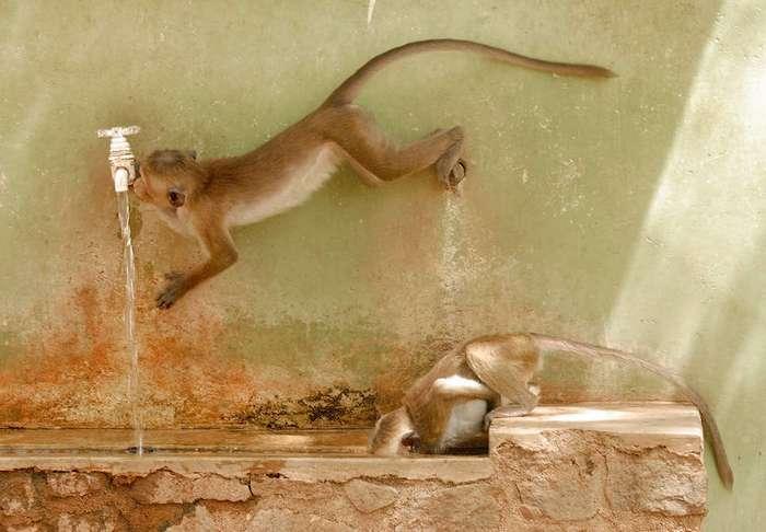 Конкурс фотографий животных от лондонского зоопарка