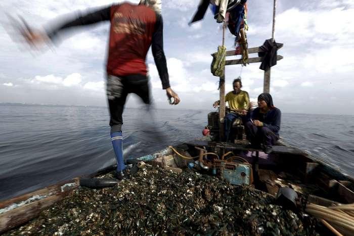 Охотники на мидий в Джакарте