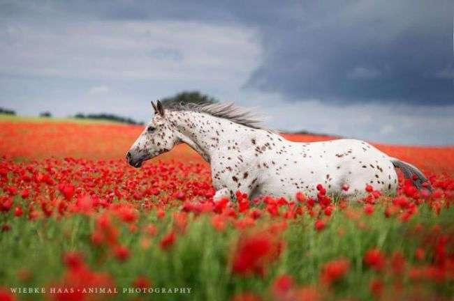 20 ярких фотографий очаровательных и грациозных скакунов