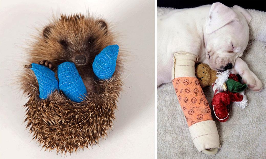 35 трогательных фото животных в гипсе, которым невозможно не умилиться