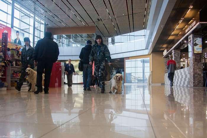 Как устроена кинологическая служба аэропорта Кольцово