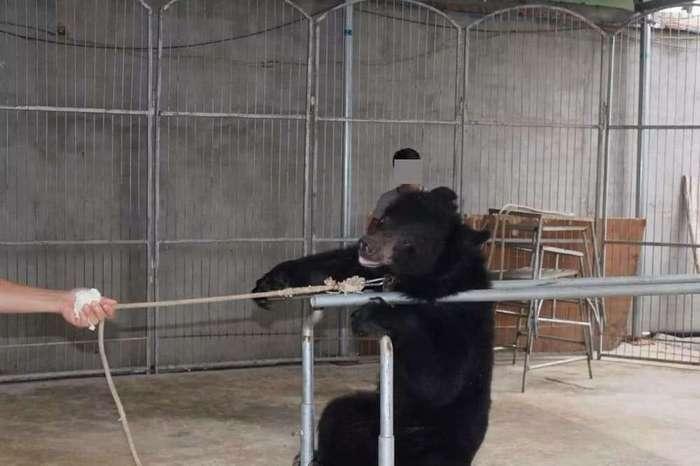 15 фотографий, которые подтверждают грустную истину: диких животных мучают по всему свету