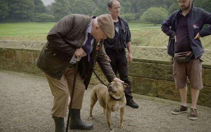 «Cамая одинокая в мире собака» получила роль в сиквеле фильма «Трансформеры»