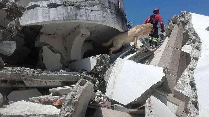 В Эквадоре пёс скончался от обезвоживания после того, как спас семь человек из-под завалов