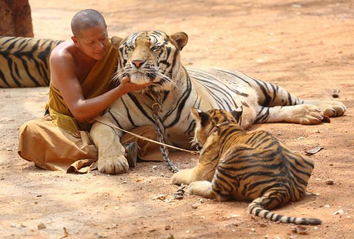 Храм тигров
