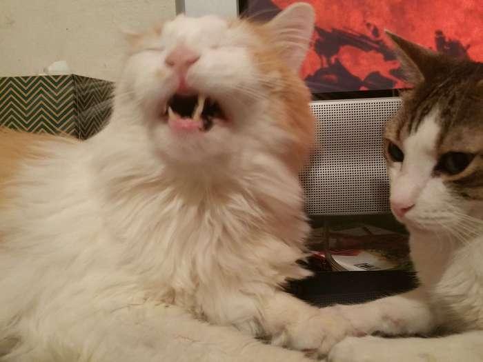 21 чихающий котик, который рассмешит вас