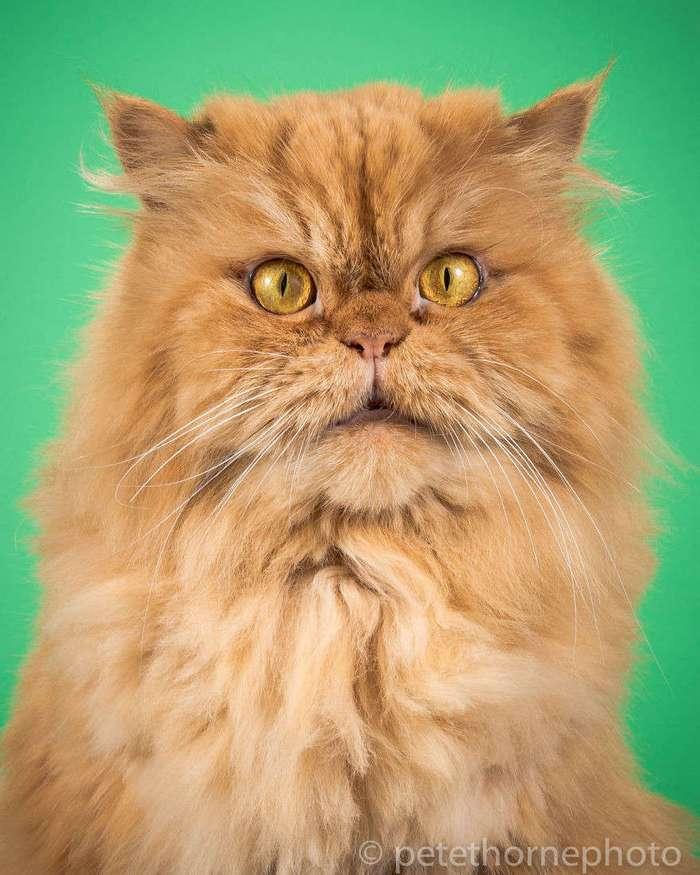 Фотограф делает забавные снимки очень толстых котов