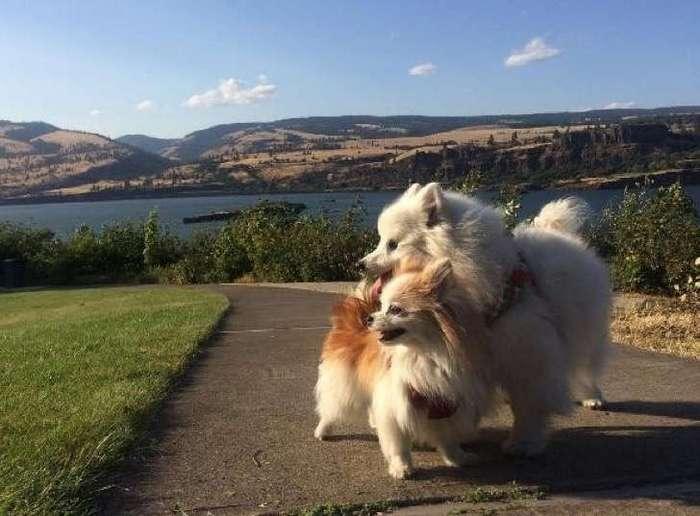 Собачий поводырь