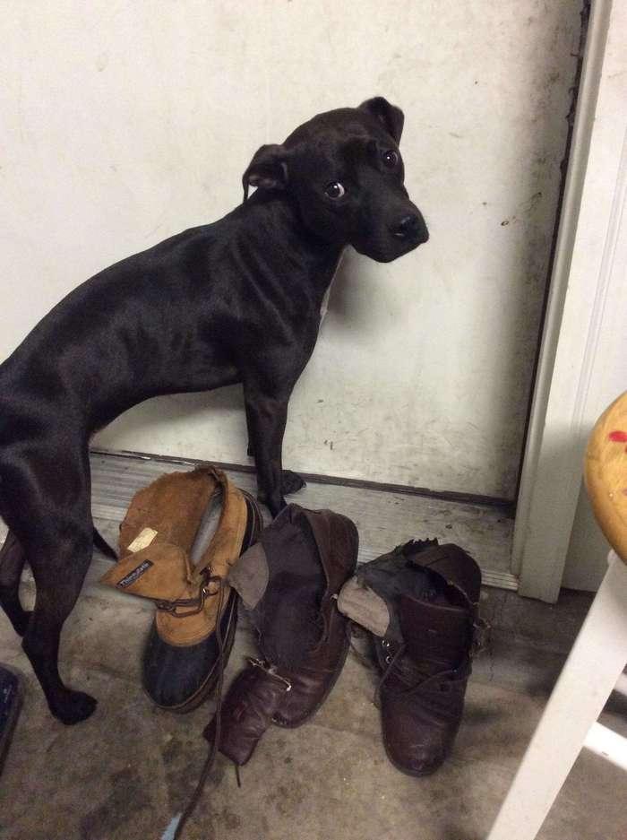 19 собак, по которым тюрьма плачет