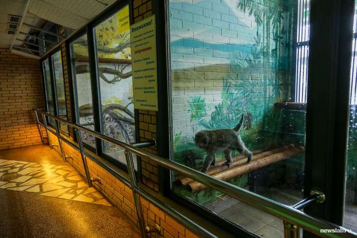Как работает Красноярский зоопарк