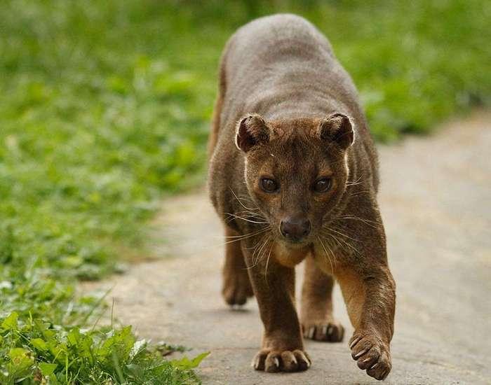 23 несуразных зверька, в чье существование сложно поверить