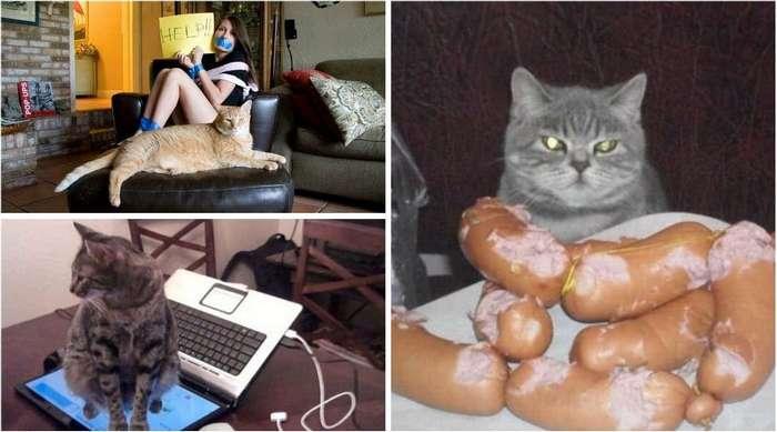 Когда кот в доме хозяин