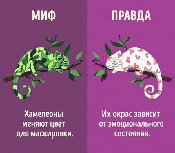 10 мифов о животных, в которые мы до сих пор верим