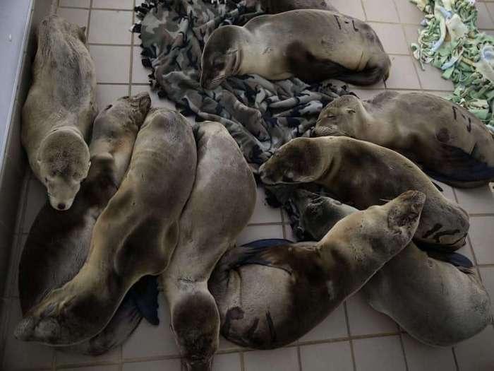 15 невероятных происшествий с животными