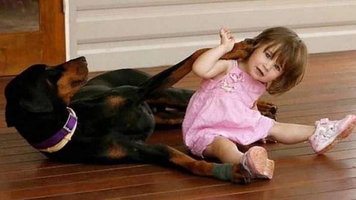Двухлетняя девочка играла с доберманом. Вдруг пёс оскалился на малышку