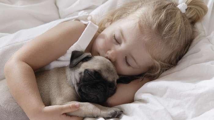 Домашние животные помогают владельцам лучше спать
