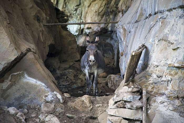 Как в Дагестане выращивают кавказских овчарок для собачьих боев