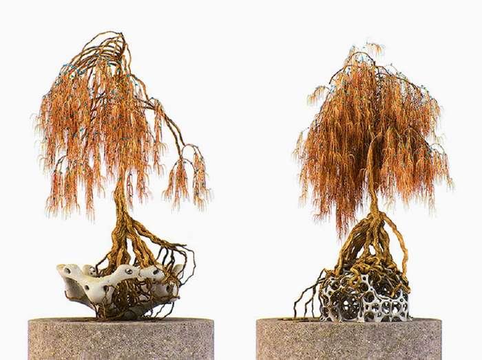 Чужеродные бонсаи. Неземные виды деревьев