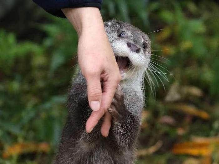 «О боже, это всё мне?!» Фотошоп-баттл с радостной выдрой и её человеком