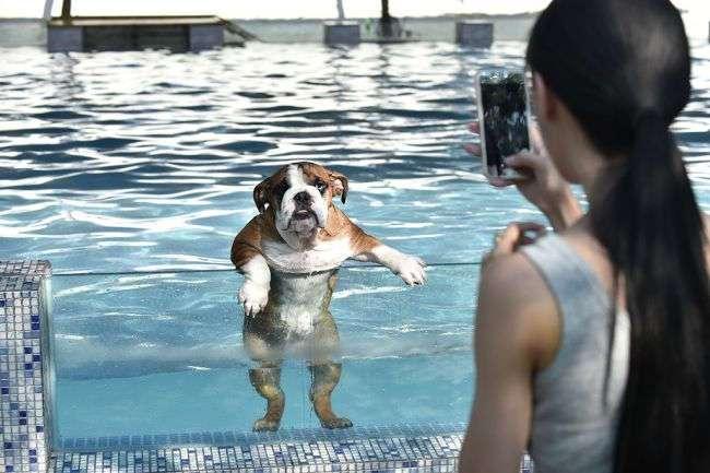 Собаки оказались способны запоминать все, что делали их хозяева