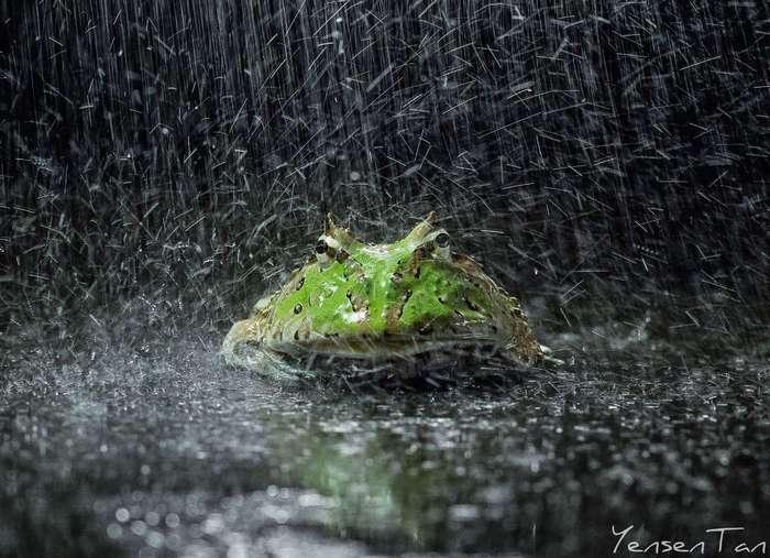 Зеленые оптимистки
