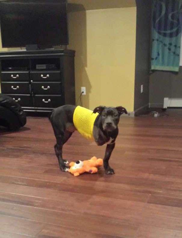 Полицейский подарил жизнь брошенному псу-инвалиду