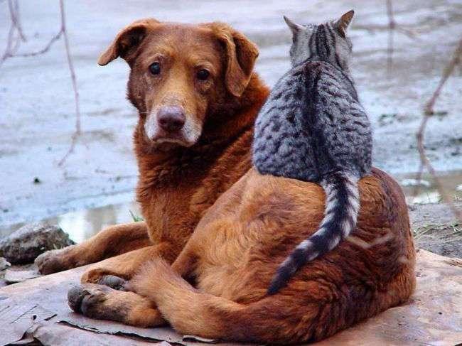 Няшные и смешные животные