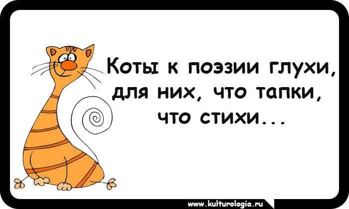 15 открыток, которые будут близки и понятны поклонникам котиков