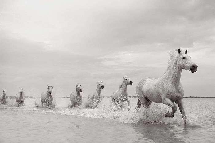 Белые лошади Камаргу. Фотограф Дрю Доггетт