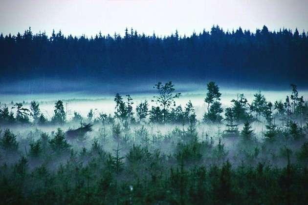 Самый дикий отель в лесах Швеции