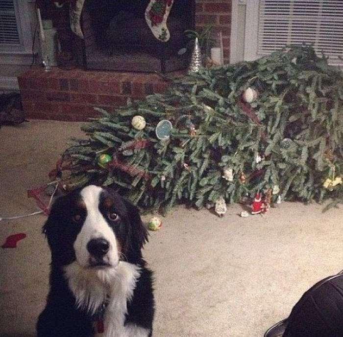 Чем занят пес, когда хозяев нет дома